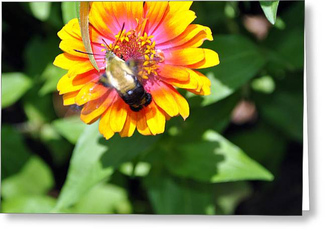 Bee Easy Greeting Card by Dion Baker