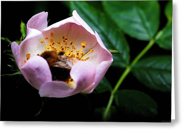 Bee Feast Greeting Card by Lucas Mazzeo
