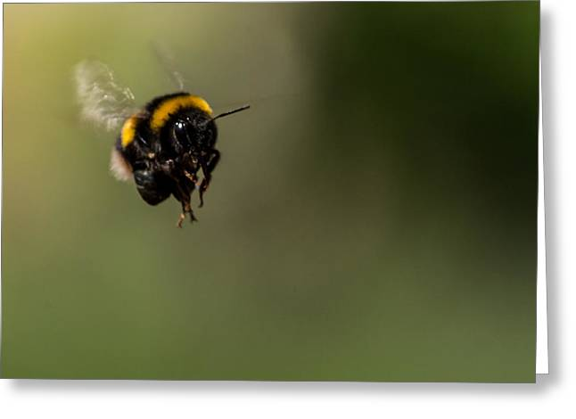 Bee Flying - View From Front Greeting Card