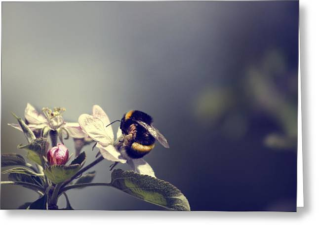 Bee Happy Greeting Card by Gabriel Calahorra