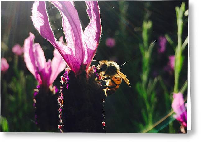Bee Illuminated Greeting Card