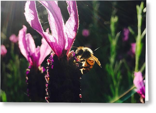 Bee Illuminated Greeting Card by Rasma Bertz