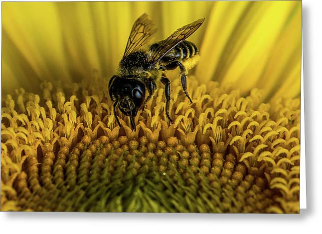 Greeting Card featuring the photograph Bee In A Sunflower by Paul Freidlund