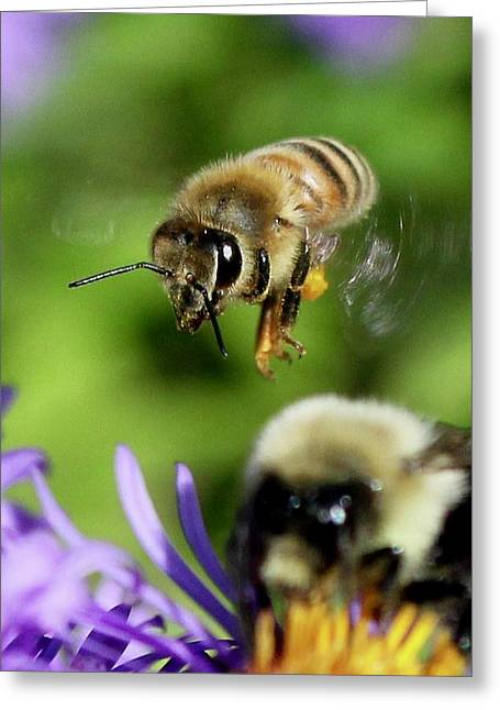 Bee In Flight  Greeting Card