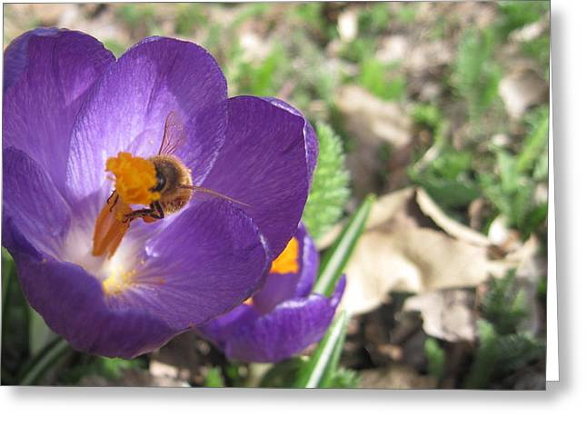 Bee In Purple Flower Greeting Card by Luke Cain