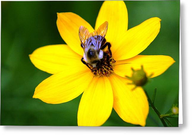 Bee In The Flower  Greeting Card by Paul SEQUENCE Ferguson             sequence dot net