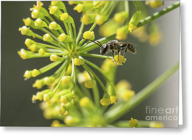 Bee Greeting Card by Jivko Nakev