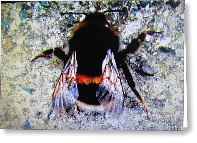Bee Greeting Card by Joyce Woodhouse