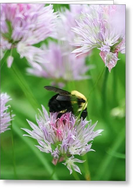 Bee Greeting Card by Melanie Beasley