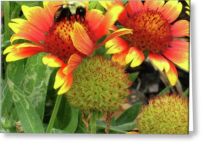 Bee On Colorful Flowers Greeting Card by Mikki Cucuzzo