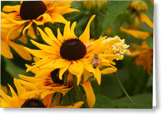 Bee On Daisy Greeting Card by Eric Irion
