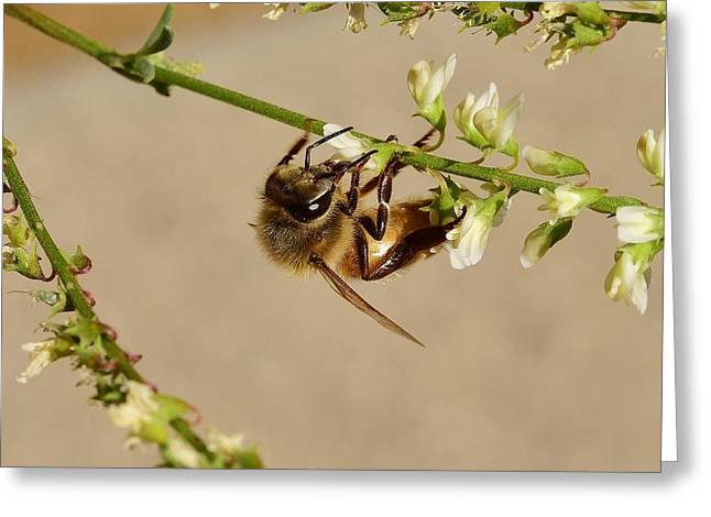 Bee On Flower Branch 1 Greeting Card