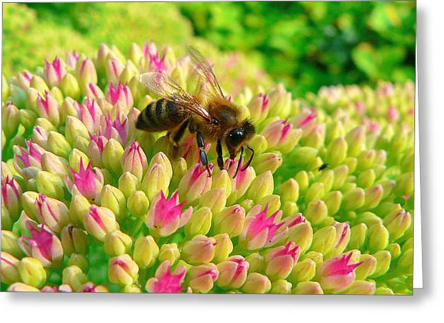 Greeting Card featuring the photograph Bee On Flower by Larry Keahey