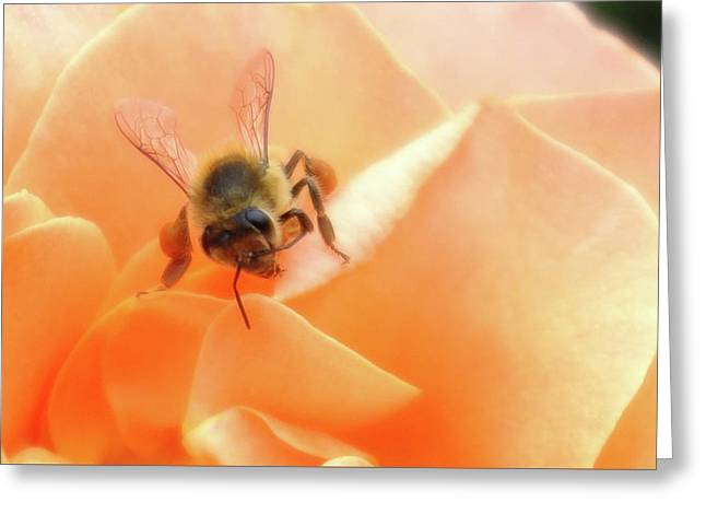 Bee On Flower Greeting Card by Matthew Bamberg