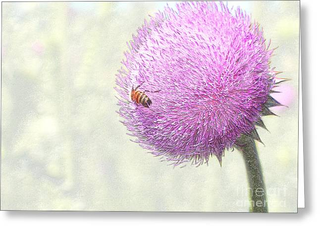 Bee On Giant Thistle Greeting Card