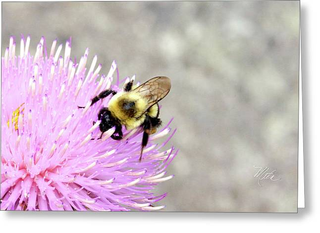 Greeting Card featuring the photograph Bee On Pink Bull Thistle by Meta Gatschenberger
