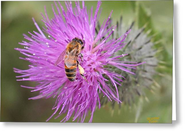 Bee On Purple Thistle Greeting Card