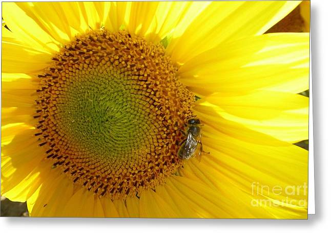 Greeting Card featuring the photograph Bee On Sunflower by Jean Bernard Roussilhe