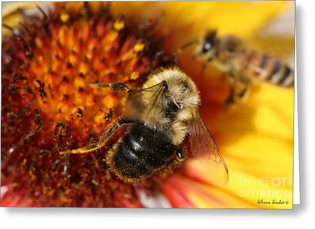 Bee One Greeting Card by Silvana Siudut