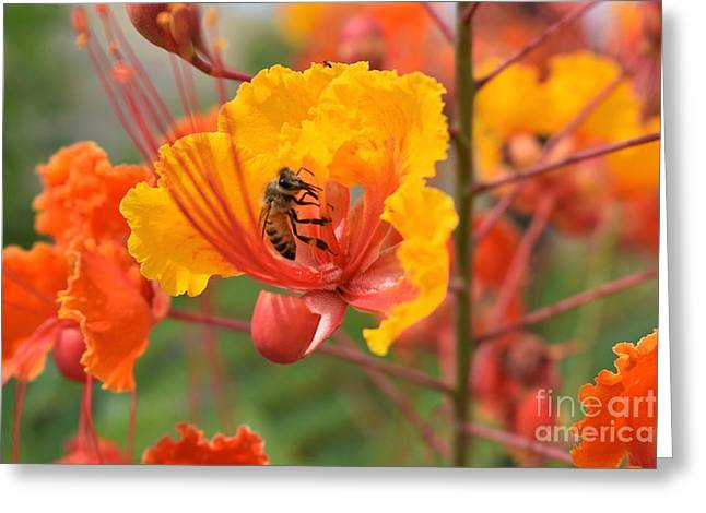 Bee Pollinating Bird Of Paradise Greeting Card