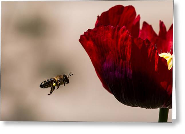 Bee Right Profile Flying To Red Flower Greeting Card