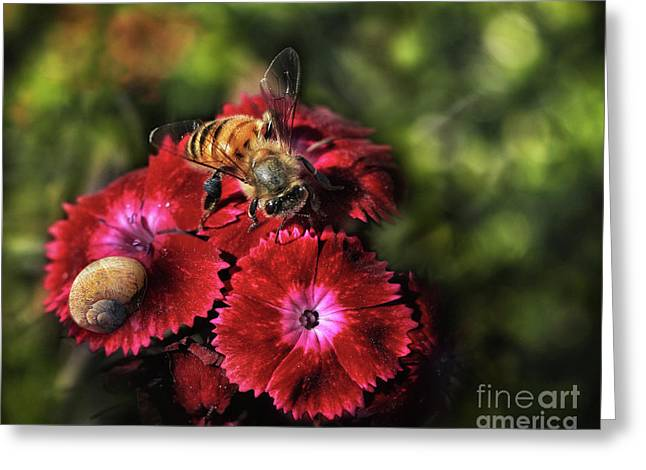 Bee Searching For Pollen Greeting Card by Stephan Grixti
