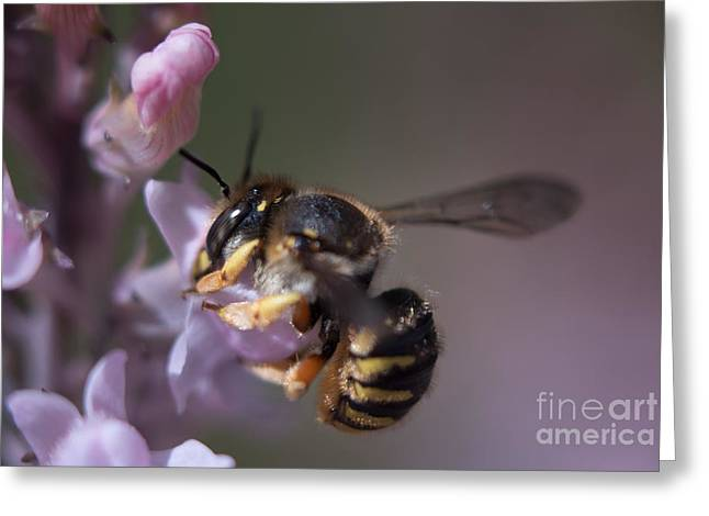 Bee Sipping Nectar Greeting Card