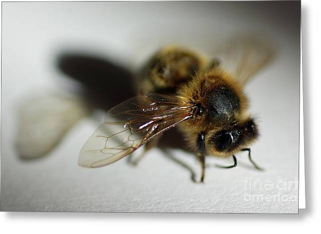 Bee Sitting On A White Sheet Greeting Card by Sami Sarkis