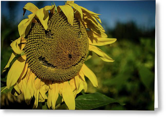 Bee Smiling Sunflowers Greeting Card
