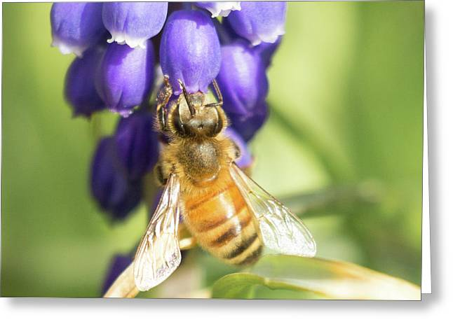 Greeting Card featuring the photograph Bee Struggles by Brian Hale