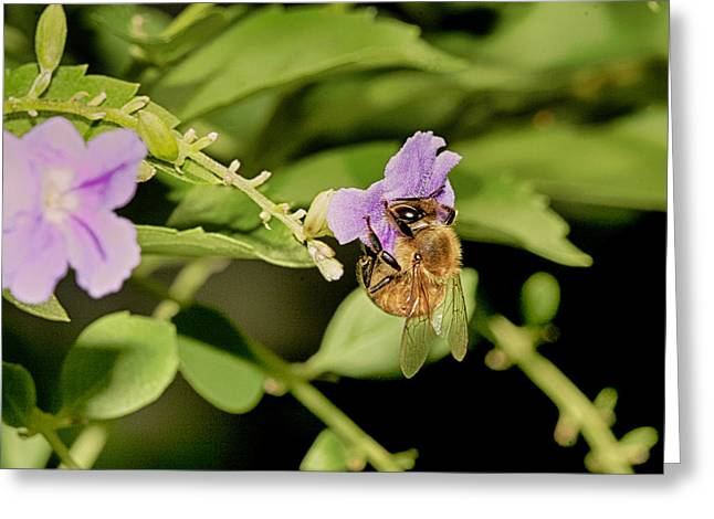 Bee Taking Pollen Greeting Card