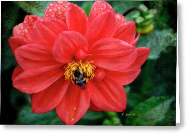 Greeting Card featuring the photograph Bee-utiful by Joan Bertucci
