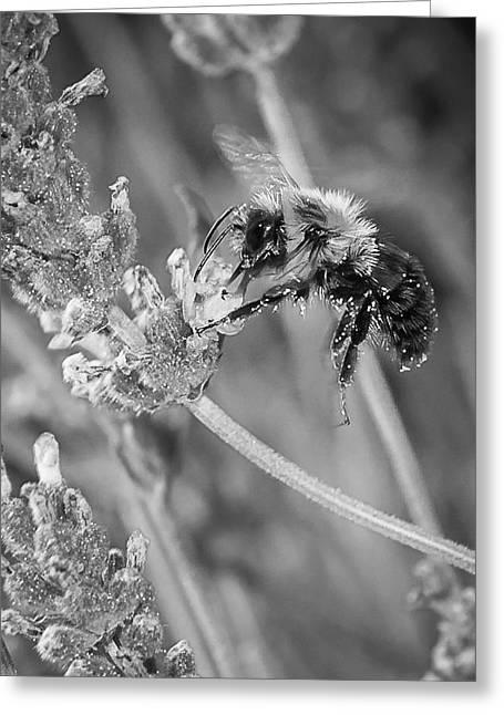 Bee Works Lavender Greeting Card