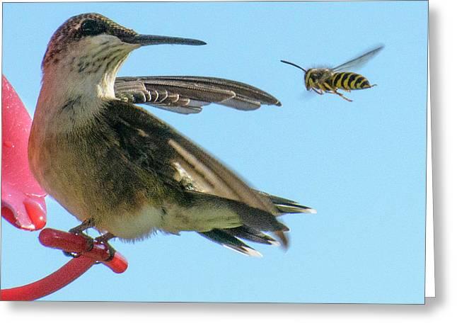 Bee_bird Greeting Card