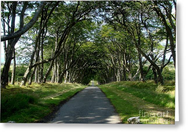 Beech Avenue Greeting Card