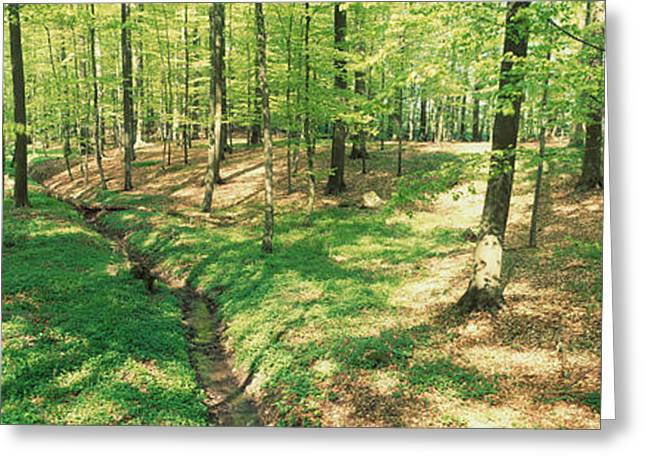 Beech Forest Greeting Card by Panoramic Images