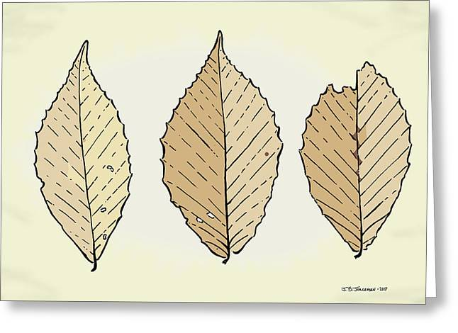 Beech Leaf Illustration Greeting Card by Jamie Jorgensen