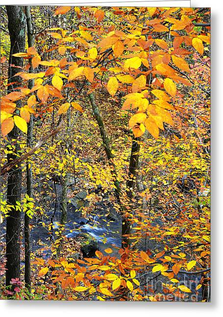 Beech Leaves Birch River Greeting Card
