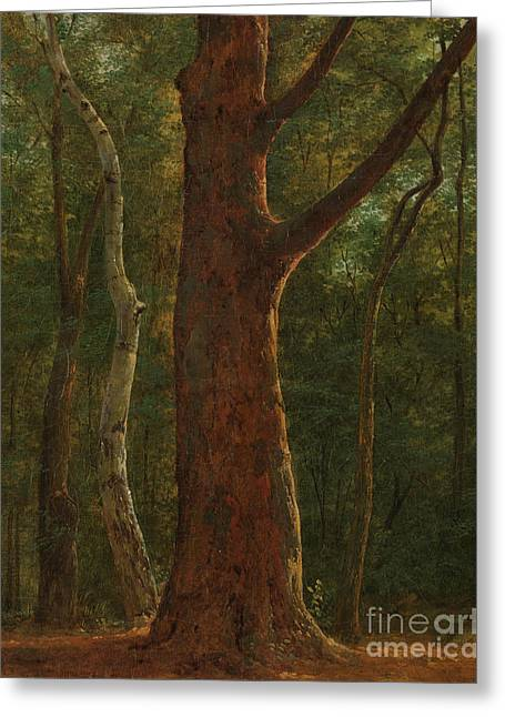 Beech Tree Greeting Card