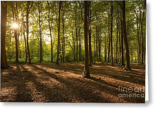 Beech Tree Woodland Summer Evening II Greeting Card by Richard Thomas
