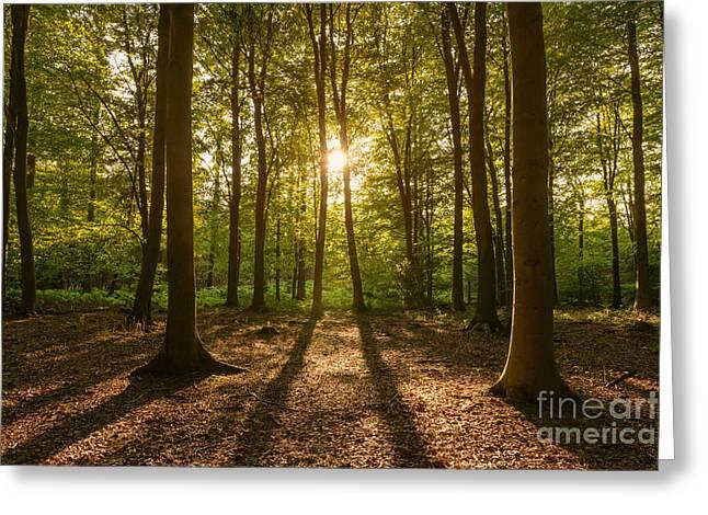 Beech Tree Woodland Summer Evening Greeting Card by Richard Thomas