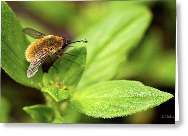 Beefly Greeting Card by Christopher Holmes