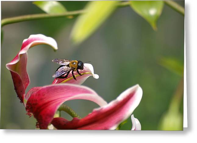 Beeing Greeting Card by Ron Plasencia