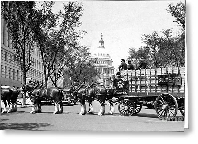Budweiser Clydesdales Greeting Cards Fine Art America
