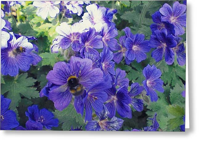 Bees And Flowers Greeting Card