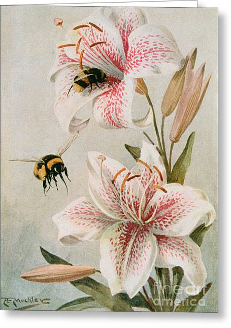Bees And Lilies Greeting Card by Louis Fairfax Muckley