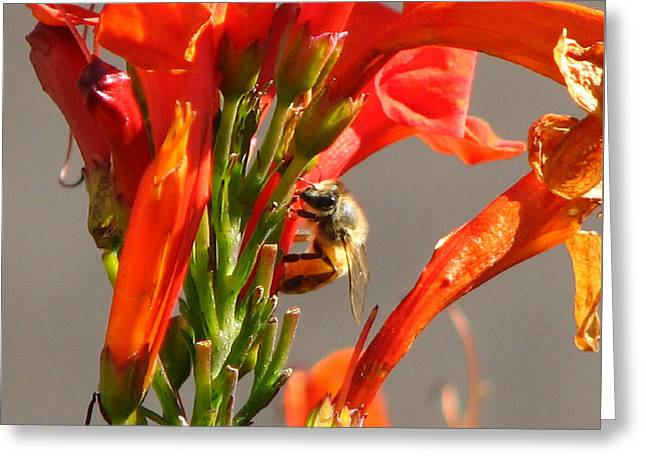 Day In A Life Of A Bee Greeting Card