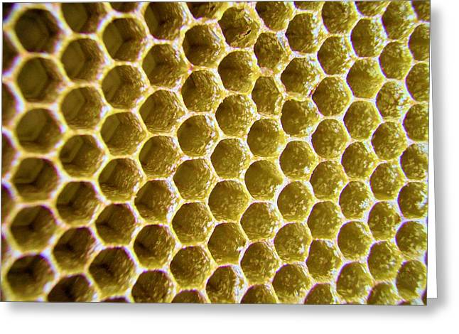 Bee's Home Greeting Card