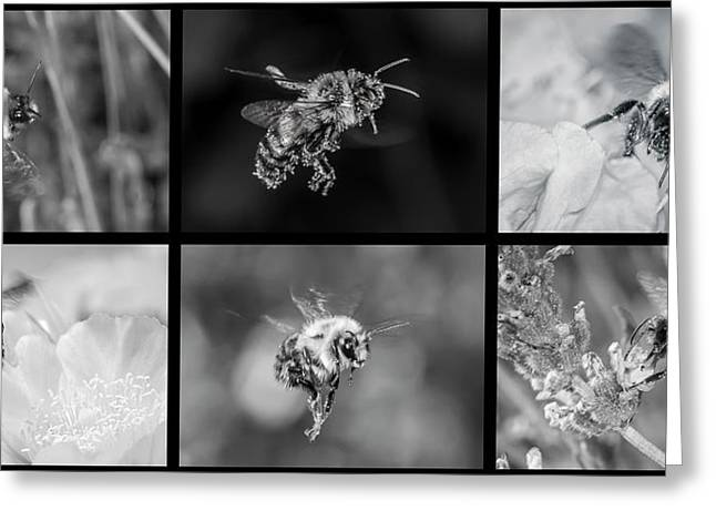 Bees In Flight In Black And White Greeting Card