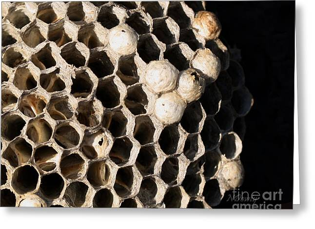 Bee's Nest Greeting Card